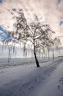 Frost and snow on a beach tree - Near Bojok - Hungary .<br /> <br /> Visit our HUNGARY HISTORIC PLACES PHOTO COLLECTIONS for more photos to download or buy as wall art prints https://funkystock.photoshelter.com/gallery-collection/Pictures-Images-of-Hungary-Photos-of-Hungarian-Historic-Landmark-Sites/C0000Te8AnPgxjRg
