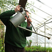 Ian Forbes, No 2 Gardener watering seedlings in the greenhouse at Newby Hall estate and gardens, Ripon, North Yorkshire, UK
