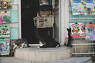 Cats play outside a shop in Tiraspol, Transnistria.