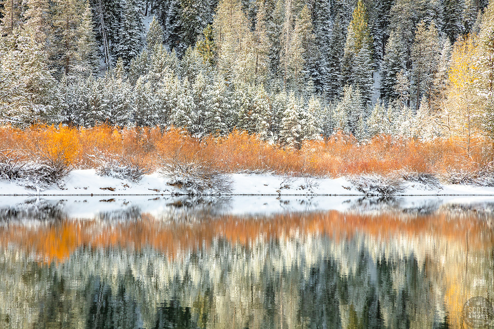 """""""Snowy Coldstream Pond 5"""" - Photograph of yellow foliage and snow at Coldstream Pond, also known as Donner Pond, shot in the fall in Truckee, California."""