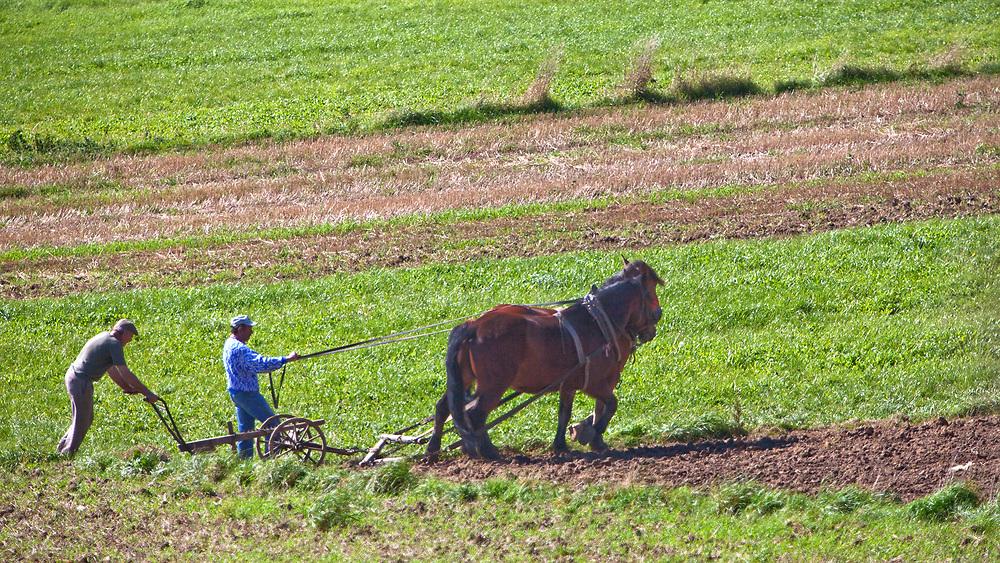 Jesienne prace na polach - Sromowce Wyżne