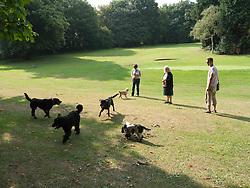 Dog-walkers on park