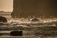 Seagulls at Haystack Rock, Cannon Beach, Oregon