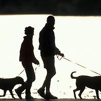 USA, Washington, Seattle, Summer sun silhouettes couple walking dog along trail surrounding Green Lake Park