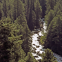 The Lidder River flows through dense forests near Pahalgam.