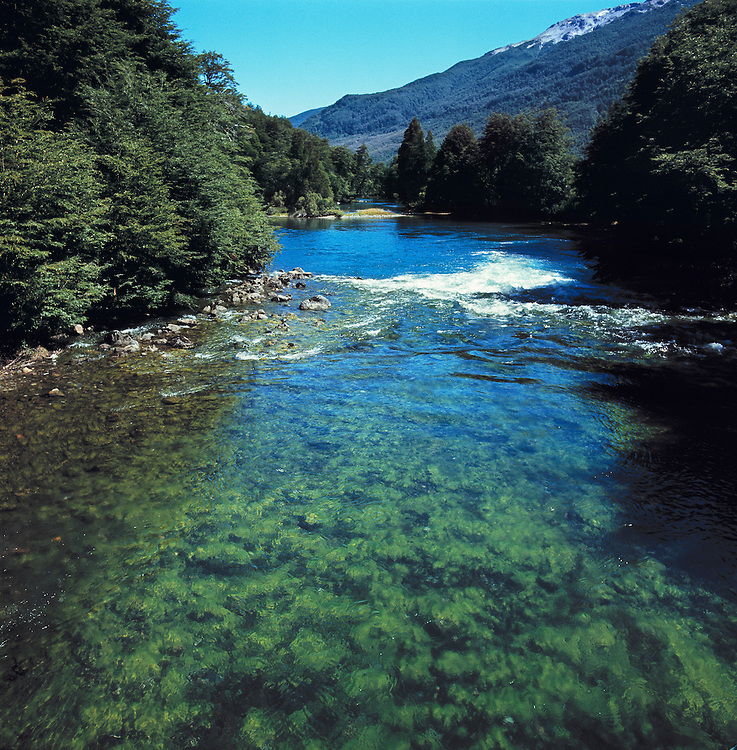 The clear waters of this trout stream in Nahuel Huapi National Park, Argentina, make visible the green rocks underneath.