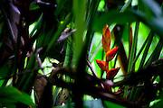 Palenque Jungle