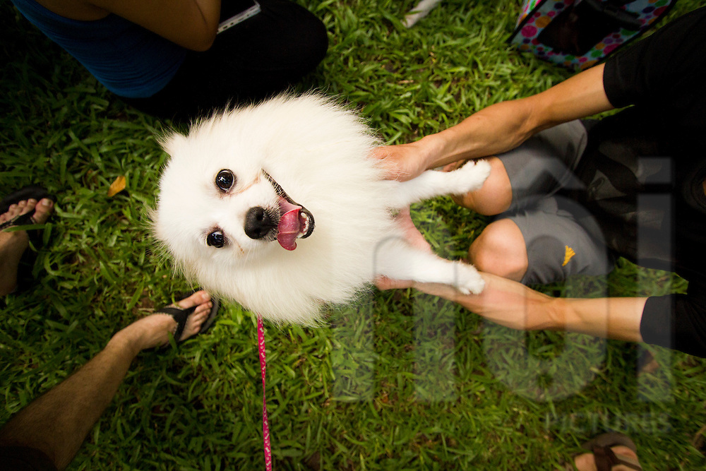 Bird eye's view of a pomerian dog standing on its rear paws. The master holds front paws on his knees. Lenin park, Hanoi, Vietnam, Asia.