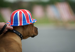 © Licensed to London News Pictures. 03/06/12.Middlesbrough, England...Harry the dog during a party to celebrate the Queen's Jubilee in Middlesbrough town centre.. .The Royal Jubilee celebrations. Great Britain is celebrating the 60th  anniversary of the countries Monarch HRH Queen Elizabeth II accession to the throne this weekend Photo credit : Ian Forsyth/LNP
