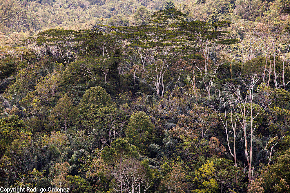 View of forests and tree canopies at Samboja Lestari, a reclaimed tropical forest conservation area in Kutai Kartanegara district, East Kalimantan, Indonesia, on March 13, 2016. <br /> (Photo: Rodrigo Ordonez)