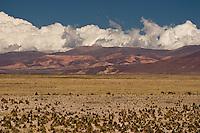 PUNA, CAMINO A CASABINDO, PROV. DE JUJUY, ARGENTINA