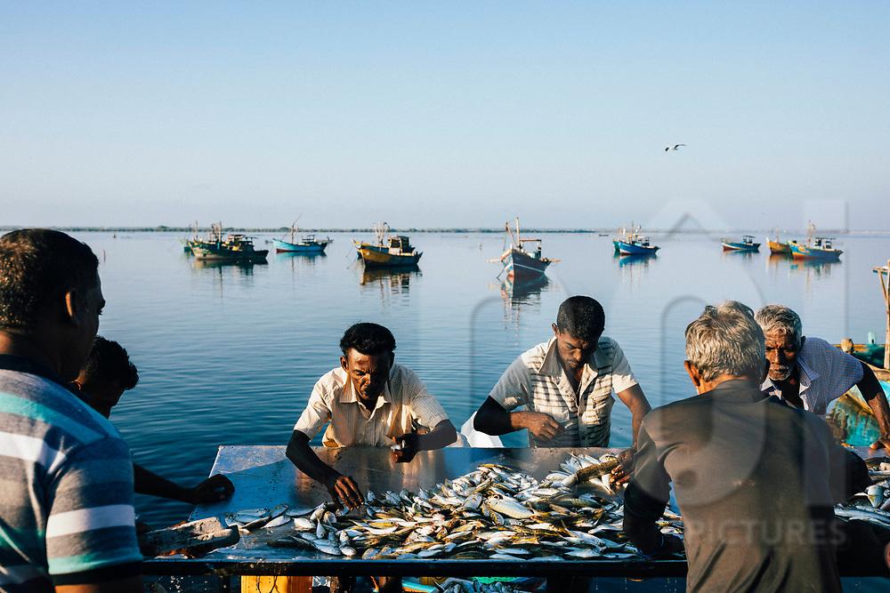 Fishermen taking in their daily catches on the Jaffna Peninsula, Sri Lanka, Asia