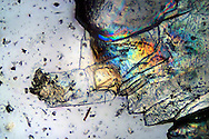 Very small salt crystals viewed at the microscope in polarized light