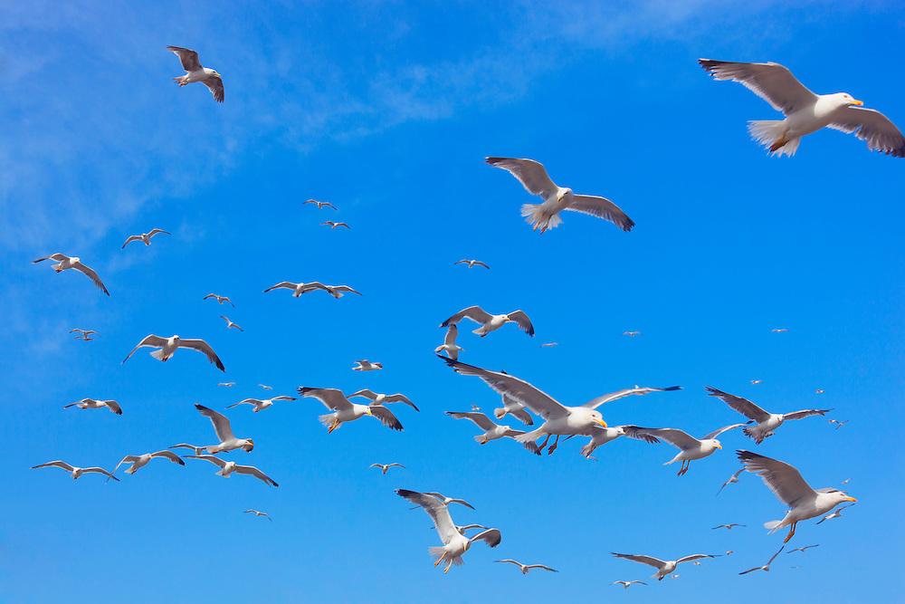 Flying seagulls against blue sky.