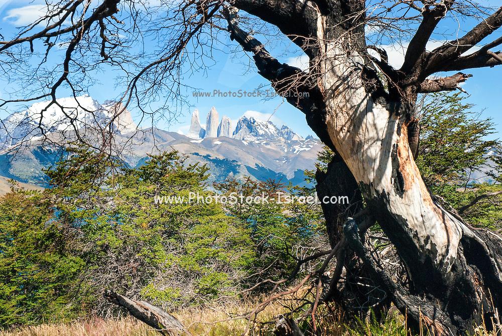 Argentina South America, mountain peaks landscape