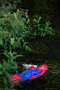 "Dead spiderman, facedown in a canal, Amsterdam This mage can be licensed via Millennium Images. Contact me for more details, or email mail@milim.com For prints, contact me, or click ""add to cart"" to some standard print options."