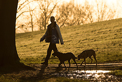 © Licensed to London News Pictures. 28/01/2015. London, UK. A woman walks her dogs on Hampstead Heath during a warm orange sunrise and cold weather this morning. Photo credit : Vickie Flores/LNP