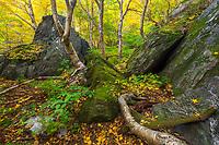 Autumn forest scene, Smuggler's Notch State Park, Stowe, VT