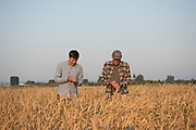 Dr. Stephen Jones evaluating wheat with graduate student Colin Curwen-McAdams in the WSU research fields in Mt. Vernon, WA.
