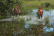 Pantanal cowboys 'Boiadeiros' in the Central Pantanal during the floods.<br /> Pantanal. Largest contiguous wetland system in the world. Mato Grosso do Sul Province. BRAZIL.  South America