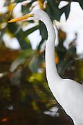 Conceicao de Alagoas_MG, Brasil.<br /> <br /> Registro da paisagem, da Fauna e da Flora da Estacao Ambiental de Volta Grande. Na foto uma garca.<br /> <br /> Landscape, fauna and flora of the Volta Grande Environmental Station. In this photo Rio Grande.<br /> <br /> Foto: JOAO MARCOS ROSA / NITRO