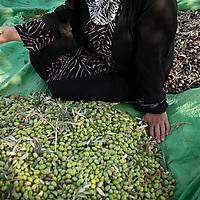 PALESTINE: FOOD