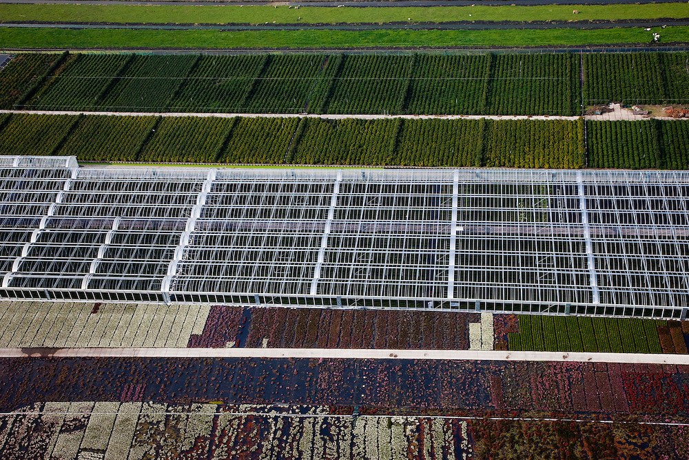 Nederland, Zuid-Holland, Boskoop, 19-09-2009; velden met jonge aanplant van planten en heesters, deels overkapt met tunnels en kassen. .fields planted with young plants and shrubs, partly roofed over with tunnels and greenhouses..luchtfoto (toeslag), aerial photo (additional fee required).foto/photo Siebe Swart