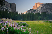 Last light on Half Dome, Ahwahnee Meadow, Yosemite Valley, California.