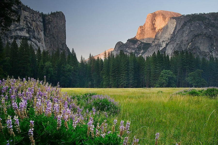 Last light on Half Dome, Ahwahnee Meadow, Yosemite Valley, California.