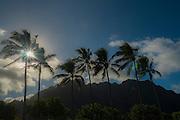 Sunset, Coconut Palm Tree, Kualoa Park, Oahu, Hawaii