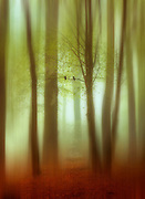 Abstraction o a forest in haze - manipulated photograph<br /> Society6 prints & more: https://society6.com/product/april-haze-abstract_print#1=45