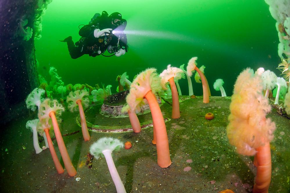 Scuba diver swims past the shipwreck HMS Saskatchewan near Nanaimo, Vancouver Island, British Columbia, Canada