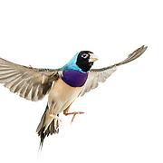 20170126 Birds in flight