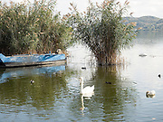 Greece, Macedonia, Castoria; Fishing Boat and swan  on Lake Orestiada