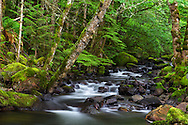 Trout Lake Creek flows through the rainforest in Sasquatch Provincial Park near Harrison Hot Springs, British Columbia, Canada