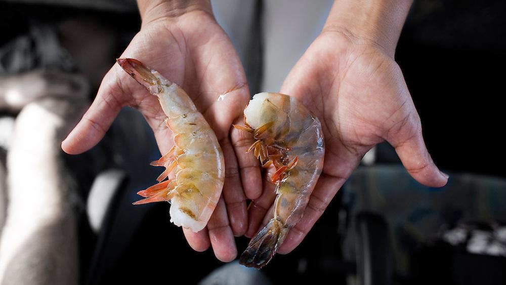 "Giant Shrimp in Puerto Vallarta, Mexico. (Isn't ""Giant Shrimp"" an oxymoron?)"