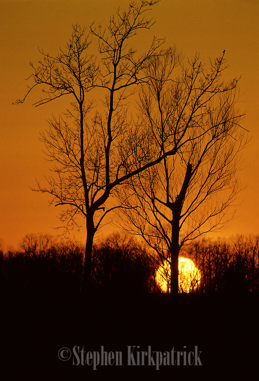 Trees are silhouetted by a winter sunset - Louisiana.