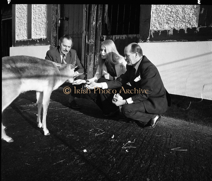 """Former Miss World Visits Dublin Zoo.<br /> 1973.<br /> 14.01.1973.<br /> 01.14.1973.<br /> 14th January 1973.<br /> Miss Eva Rueber-Staier, former Miss World from Austria and the """"World Wildlife Fund's Anniversary Girl"""", paid her first visit to Ireland to open the Shell/BP Irish Wildlife Promotion. As part of the promotion Eva paid a visit to Dublin Zoo in the Phoenix Park, Dublin.<br /> <br /> Image shows Miss Rueber-Staier accompanied by Mr Herbert James, Operations Manager, Irish Shell/BP and Mr Terry Murphy,The Director, Dublin Zoo as she pets a blackbuck antelope. 70s, views, of,  dublin,"""