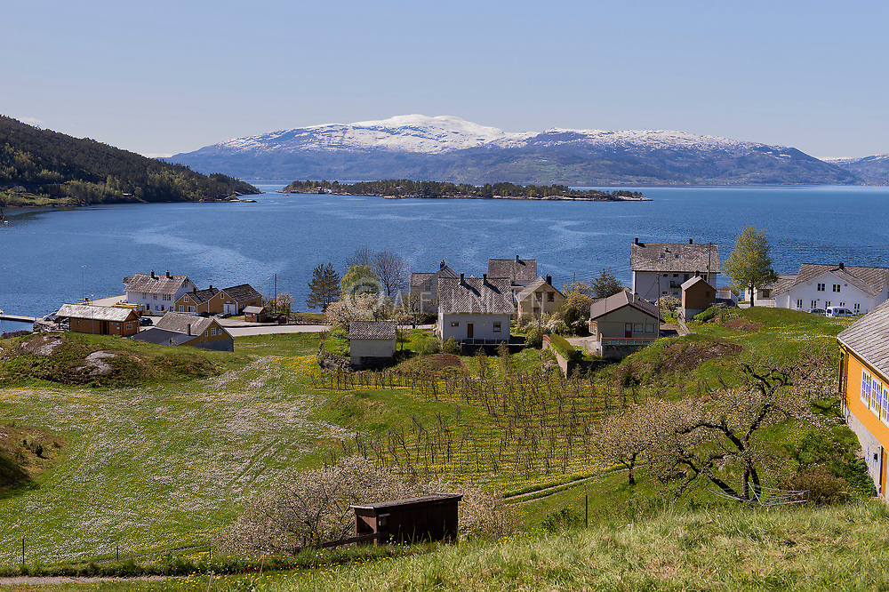 The small community Herand in Hardanger, western Norway. May 2015.