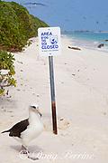 Laysan albatross, Phoebastria immutabilis, next to a beach closure sign, Sand Island, Midway Atoll, Midway National Wildlife Refuge, Papahanaumokuakea Marine National Monument, Northwest Hawaiian Islands, USA ( North Pacific Ocean )