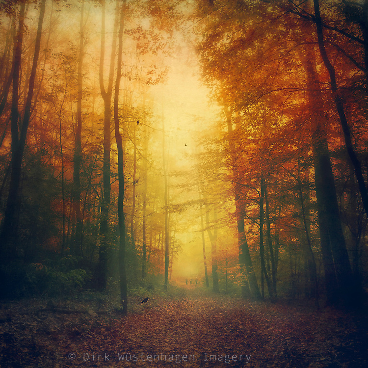 Atmospheric autumn morning walk through a forest.<br /> <br /> Prints & more: https://society6.com/product/autumn-morning-mood_tapestry?curator=dirkwuestenhagenimagery