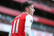 Mesut Ozil of Arsenal looking on. Premier league match, Arsenal v Middlesbrough at the Emirates Stadium in London on Saturday 22nd October 2016.<br /> pic by John Patrick Fletcher, Andrew Orchard sports photography.