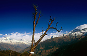 High in the mountains, within the tree line of this harsh Asian climate, a lone tree stands as testament to the deforestation problem in the Himalayas, wood used for tourist showers. Communities here partly-depend on the agriculture of rice-growing but also on the passing tourist trade. Western trekkers from all over the world walk through these tiny communities on their way up the series of climbing trails of the Annapurna Conservation Sanctuary circuit, a sometimes rigorous walk from the low hills of Pokhara to the higher altitudes of Annapurna, the (26,000 feet (8,000 metre) peak. To be greeted by so much choice is the most rewarding experience and the offer of hot showers is about the best reward for so much exertion.