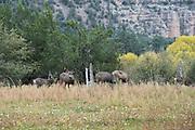 Photographs of Mammals New Mexico