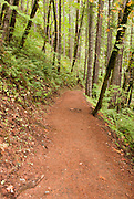 Eagle Creek Trail in the Columbia River Gorge of Oregon Missoula Photographer