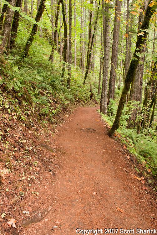 Eagle Creek Trail in the Columbia River Gorge of Oregon Missoula Photographer