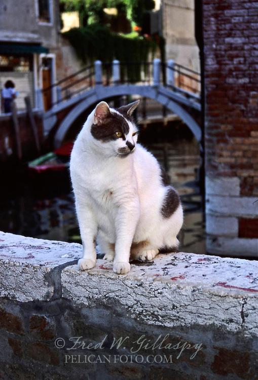 Venice Cats 2, Italy