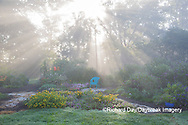 63821-23707 Sun rays in fog in flower garden, Marion Co., IL