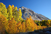 Fall Colors in the High Sierras