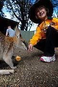 Child (6 years old) feeding Wallaby. Sydney, Australia